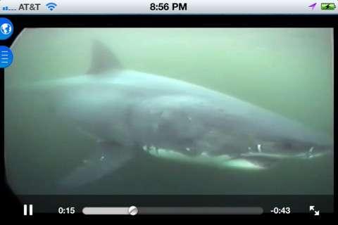 Ocean Predator Alert Apps