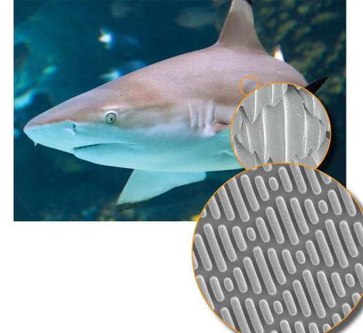 Jaws-Inspired Antibacterials