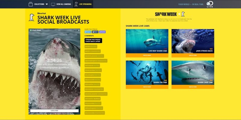 Shark Video Streaming Systems