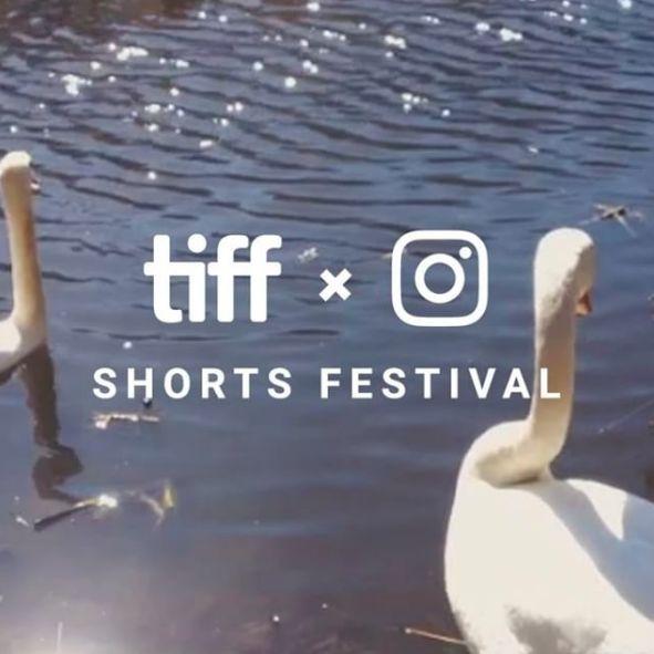 Social Film Festivals
