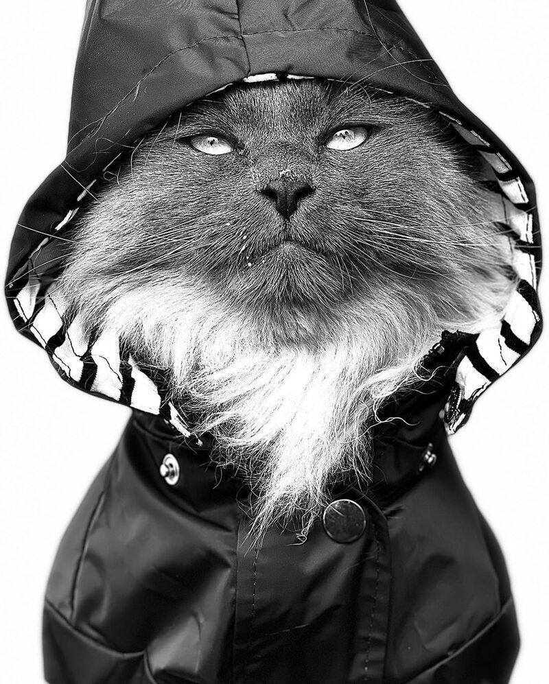 Pet Portrait Campaigns