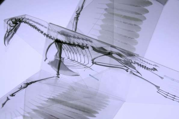 Spooky Skeletal Papercraft