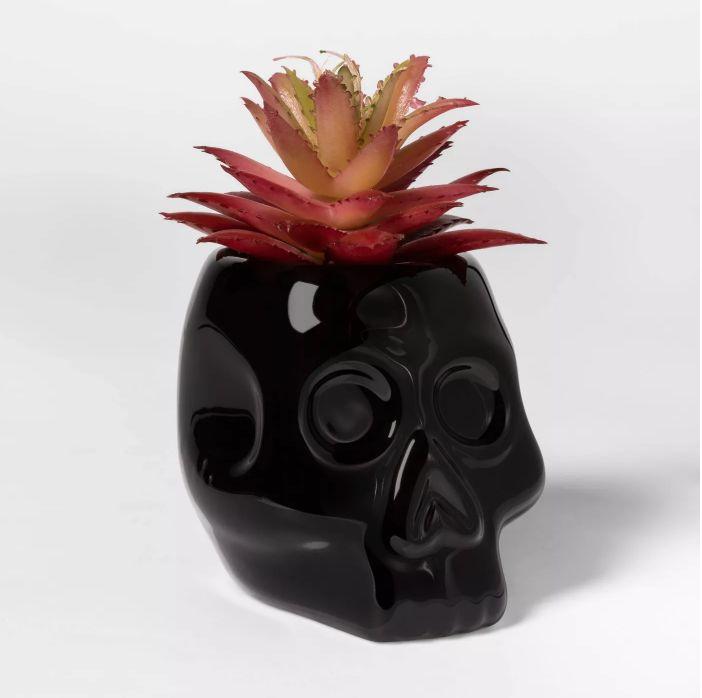 Spooky Skull Succulents