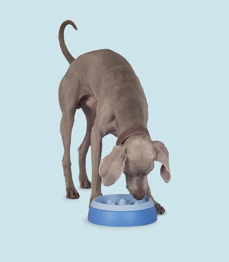 Mountainous Pet Feeding Bowls
