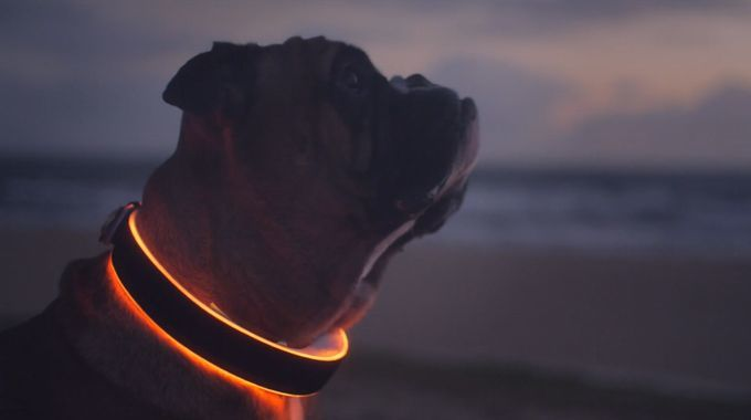 LED Smart Dog Collars