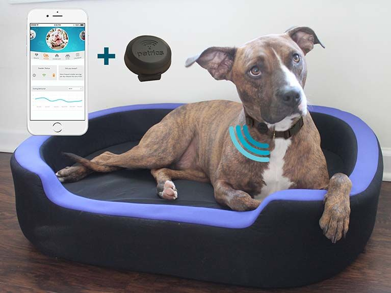 Health-Optimizing Pet Trackers