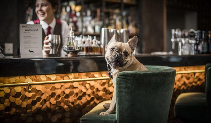 Dog-Focused Drink Menus