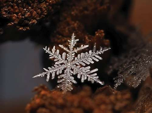 Magnified Snowflake Photography