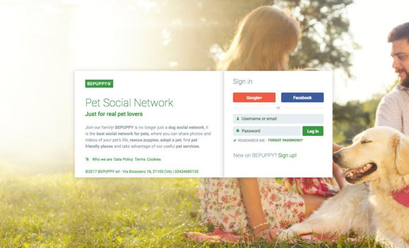 Pet-Focused Social Networks
