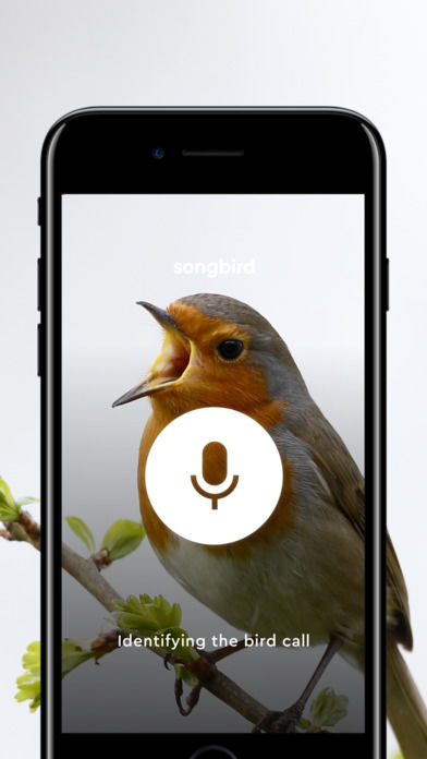Birdsong Identification Apps