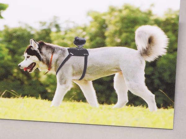 Canine-Mounted Camera Brackets