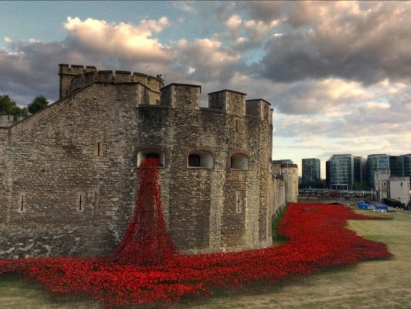 Spewing Poppies Installations