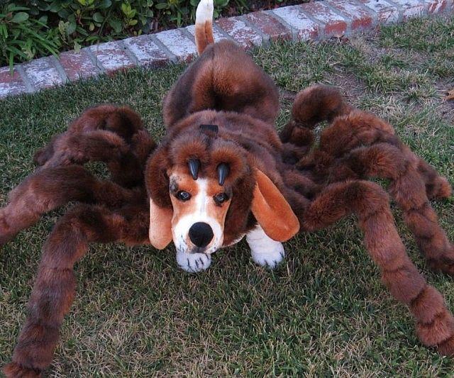 Spider Dog Costumes
