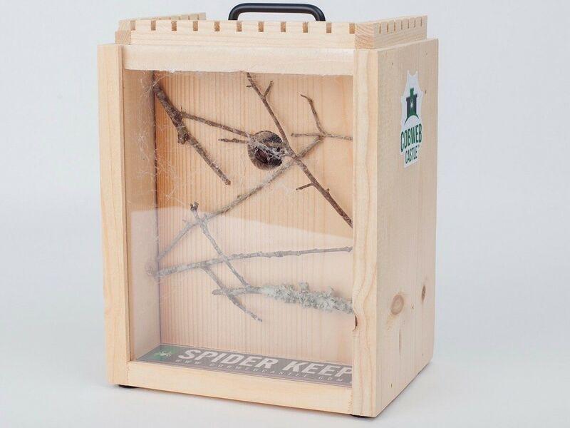 Educational Arachnid Habitats
