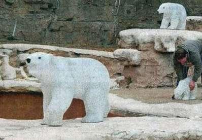 Electronic Zoo Animals