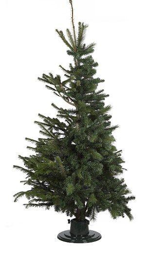 Hybrid Christmas Trees