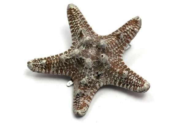Sea Star Hair Accessories