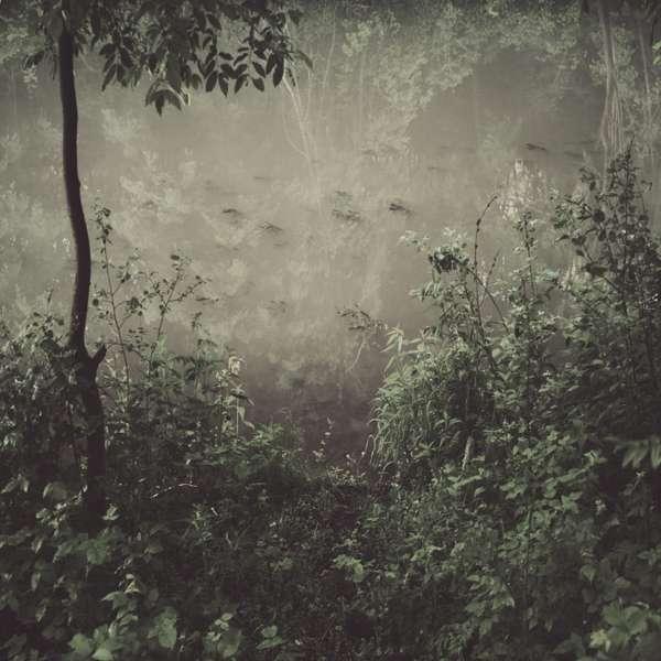 Waning Woodland Photography