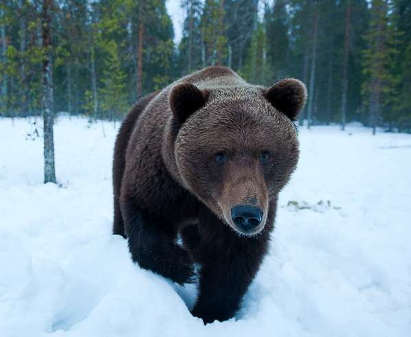 Grizzly Photography