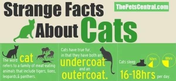 Random Feline Stats