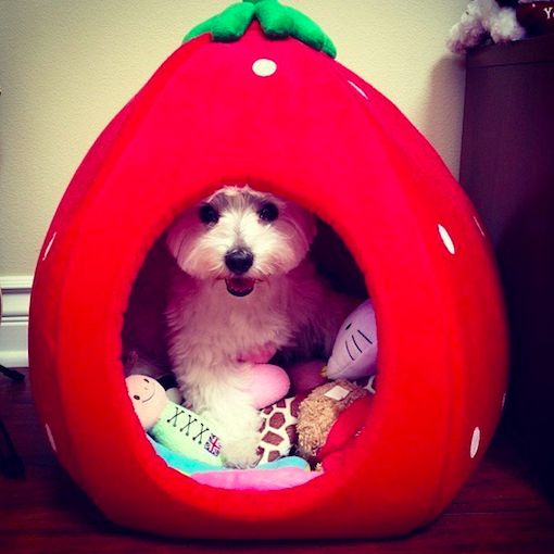 Hollowed Fruit Pet Beds