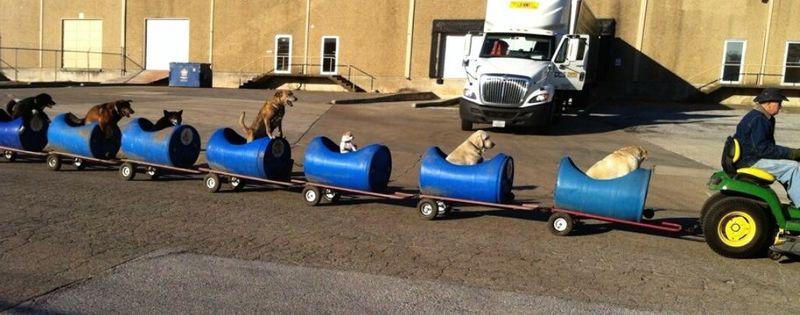 Rescue Dog Trains