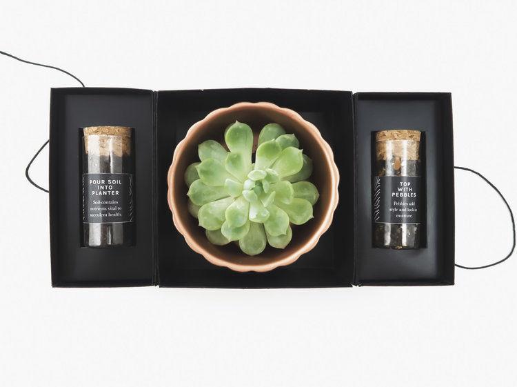 Conceptual Succulent Planting Kits