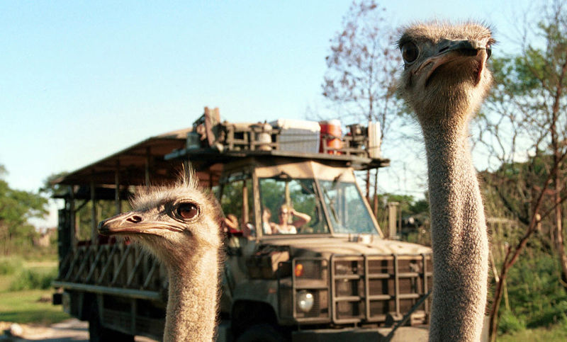 Sunset Safari Experiences