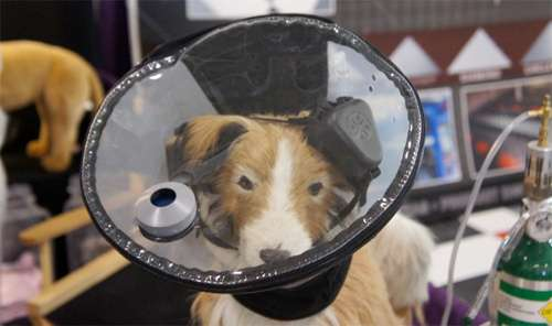 Canine Aviation Helmets