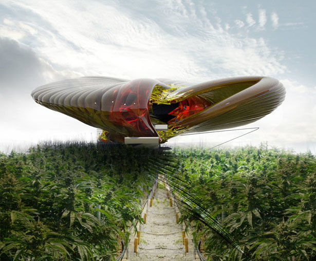 Contemporary Cannabis Farms