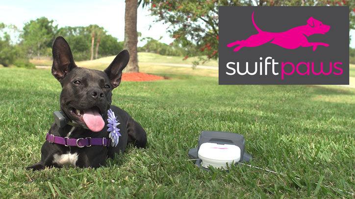 Brain-Stimulating Dog Games