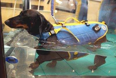 Swimming Pools For Fat Dogs