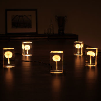 Illuminated Dandelion Lamps