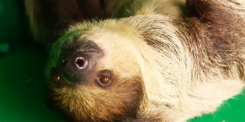 Sloth Streaming Banking Events