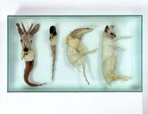 Taxidermy Text