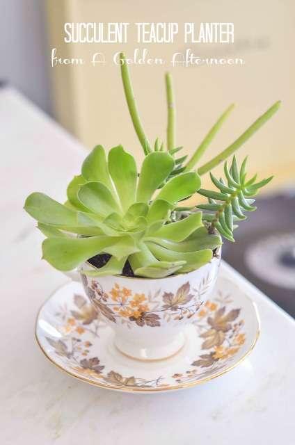 Tiny Teacup Planters