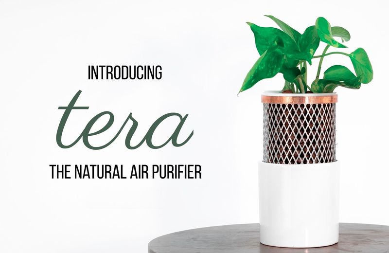 Air-Purifying Desktop Planters