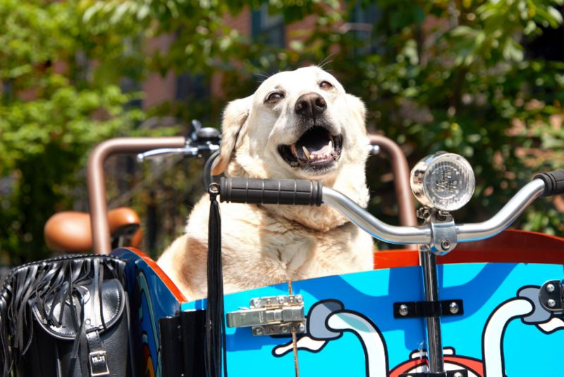 Electric Cargo Dog Bikes