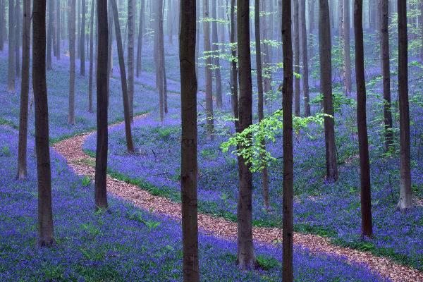 Flowering Forest Floors