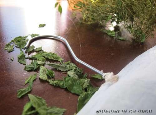 Herbaceous Coat Hangers