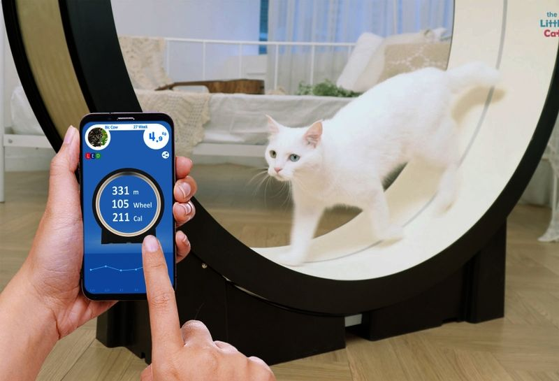 Connected Cat Exercise Machines