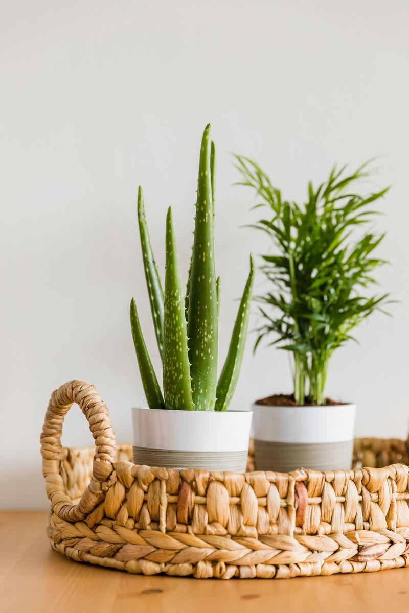 Online Houseplant Shops