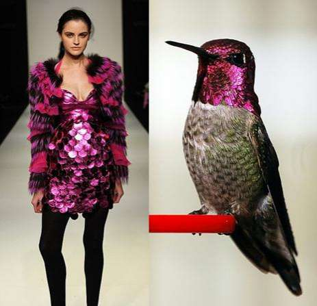 Hummingbird Fashion