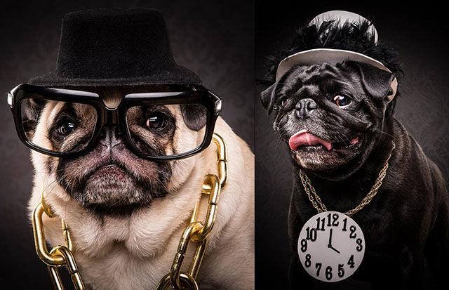 Hip-Hop Pug Portraits
