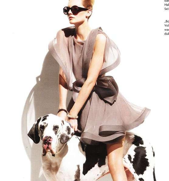 Fashionable Canine Companions