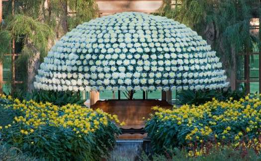 Domed Plant Marvels