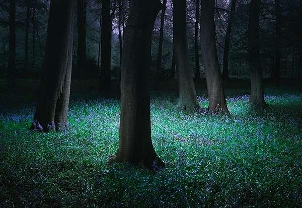 Nocturnal Naturetography