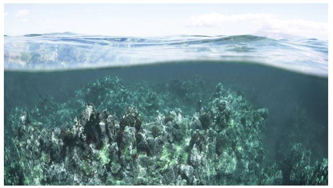 Chemical-Absorbing Algae Beads
