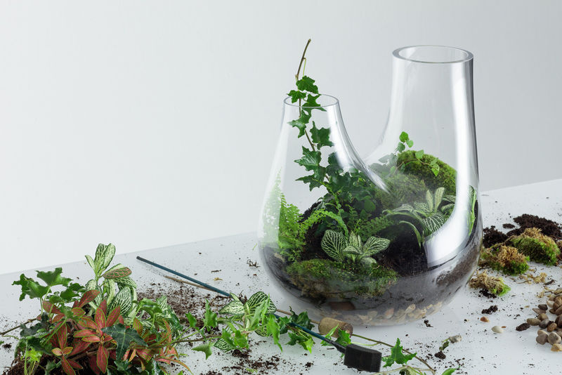 Customized Home Terrariums