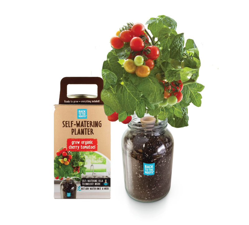Tomato-Growing Kits